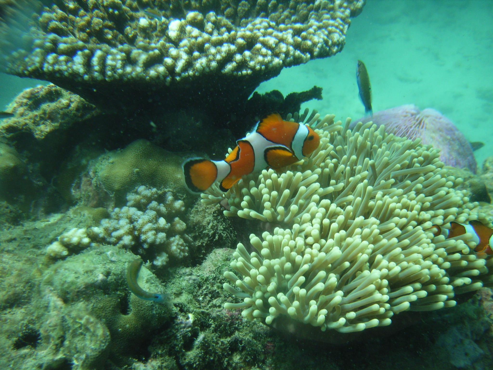 旅行心情记录:最美丽的动物.其实是在海里