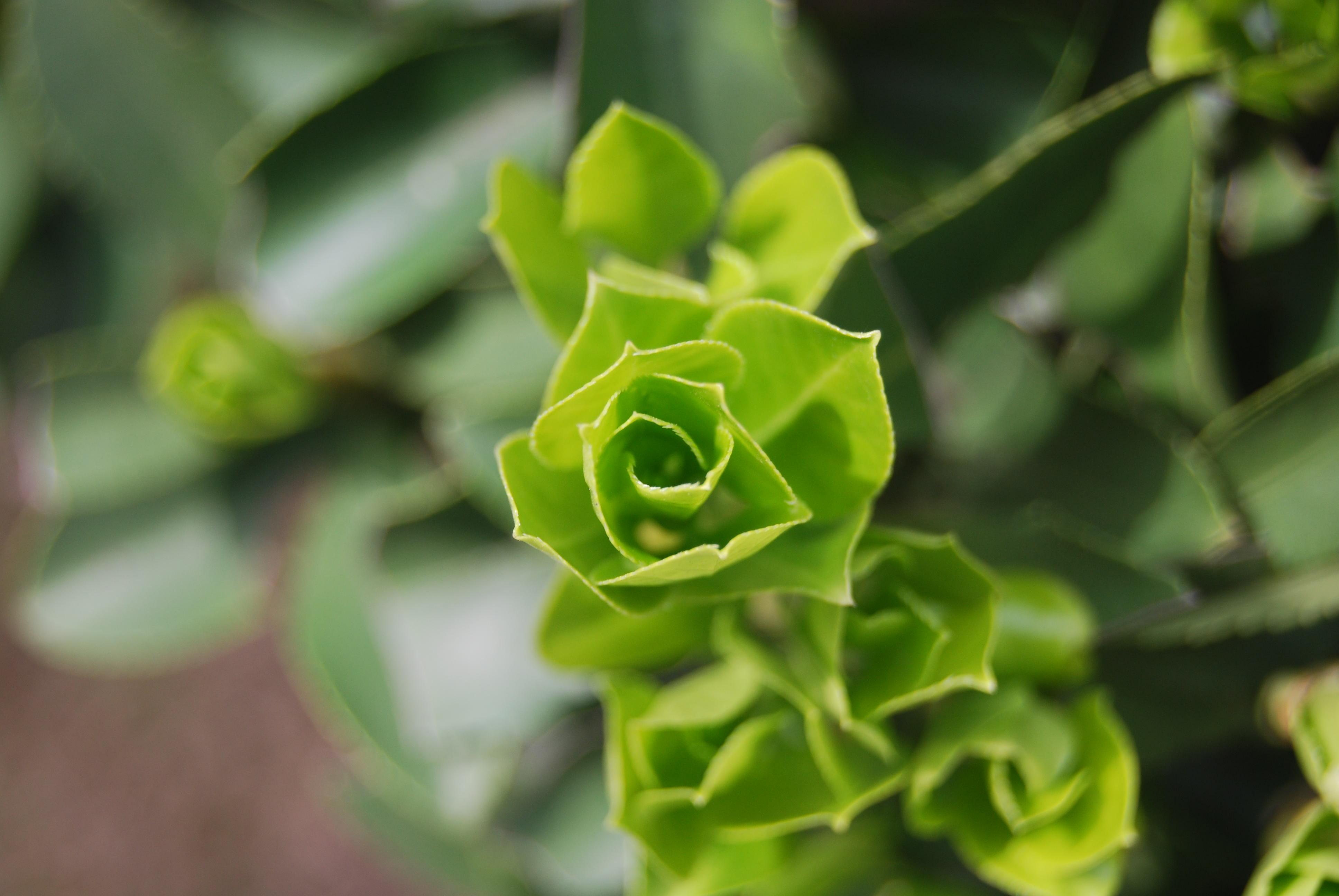 背景 壁纸 花 绿色 绿叶 盆景 盆栽 树叶 植物 桌面 3872_2592