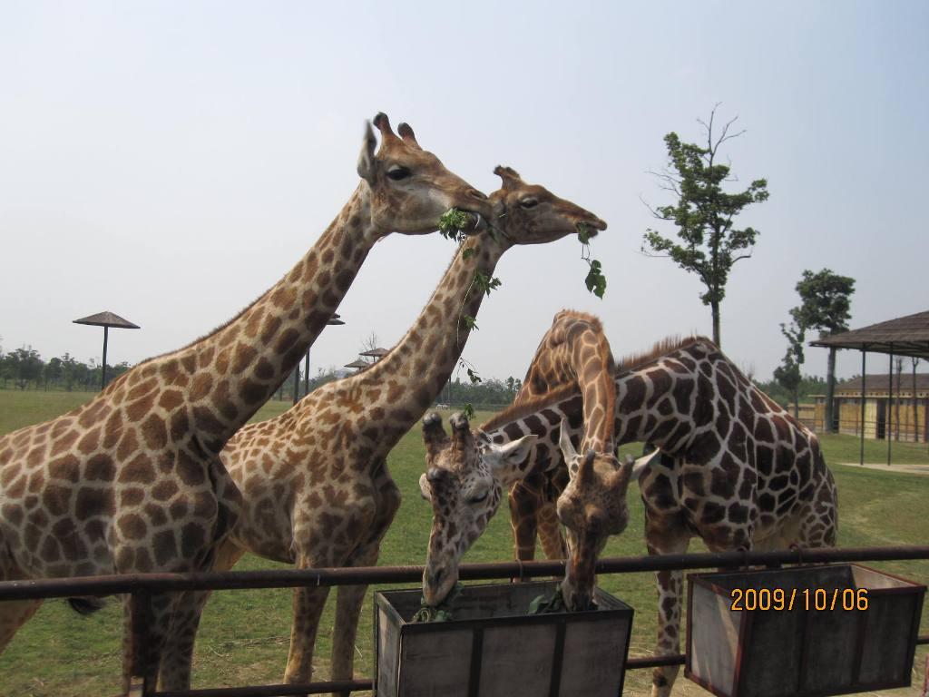 儿童动物世界是一款有趣的介绍动物知识的软件